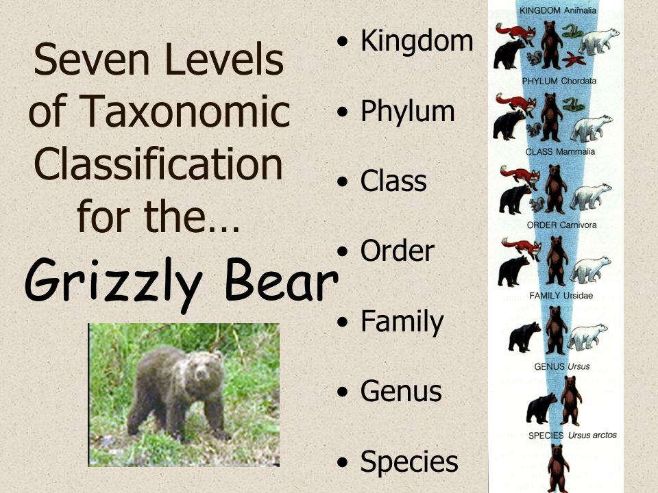 Seven Levels of Taxonomic Classification for the…
