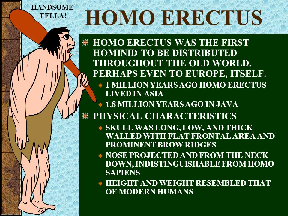 HANDSOME FELLA! HOMO ERECTUS. HOMO ERECTUS WAS THE FIRST HOMINID TO BE DISTRIBUTED THROUGHOUT THE OLD WORLD, PERHAPS EVEN TO EUROPE, ITSELF.