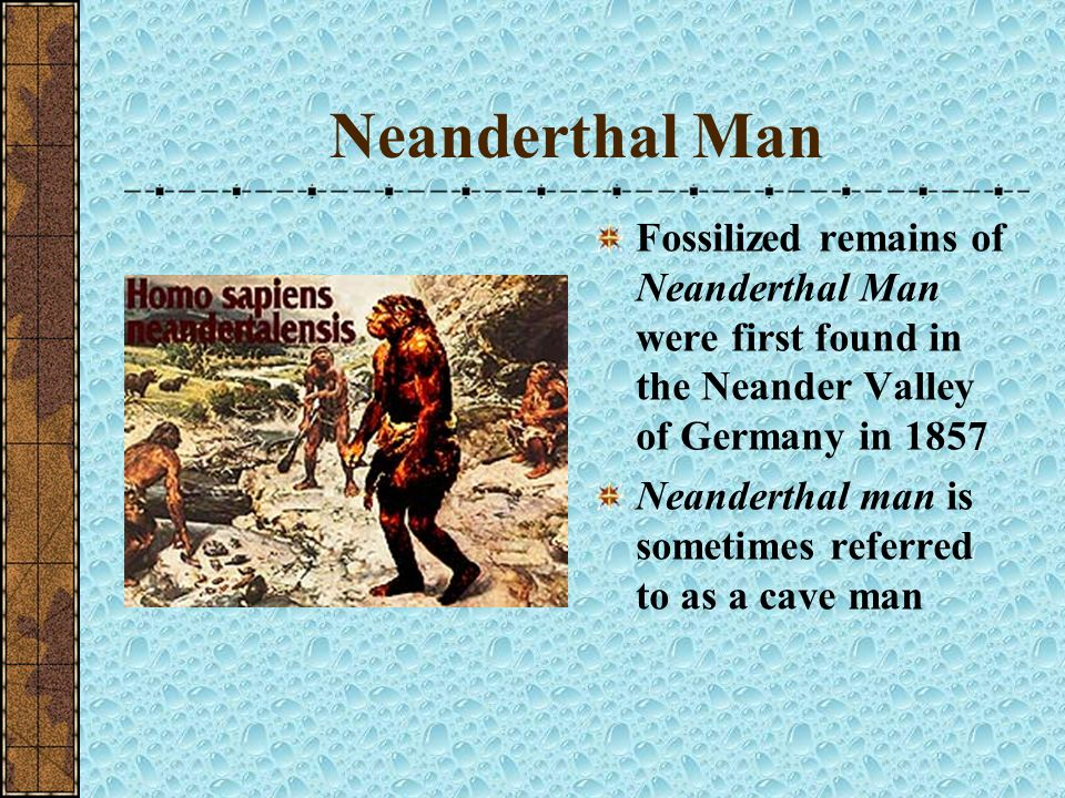 Neanderthal Man Fossilized remains of Neanderthal Man were first found in the Neander Valley of Germany in 1857.