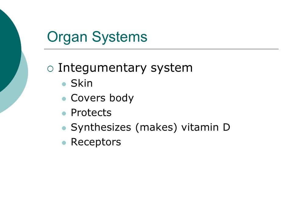 Organ Systems Integumentary system Skin Covers body Protects