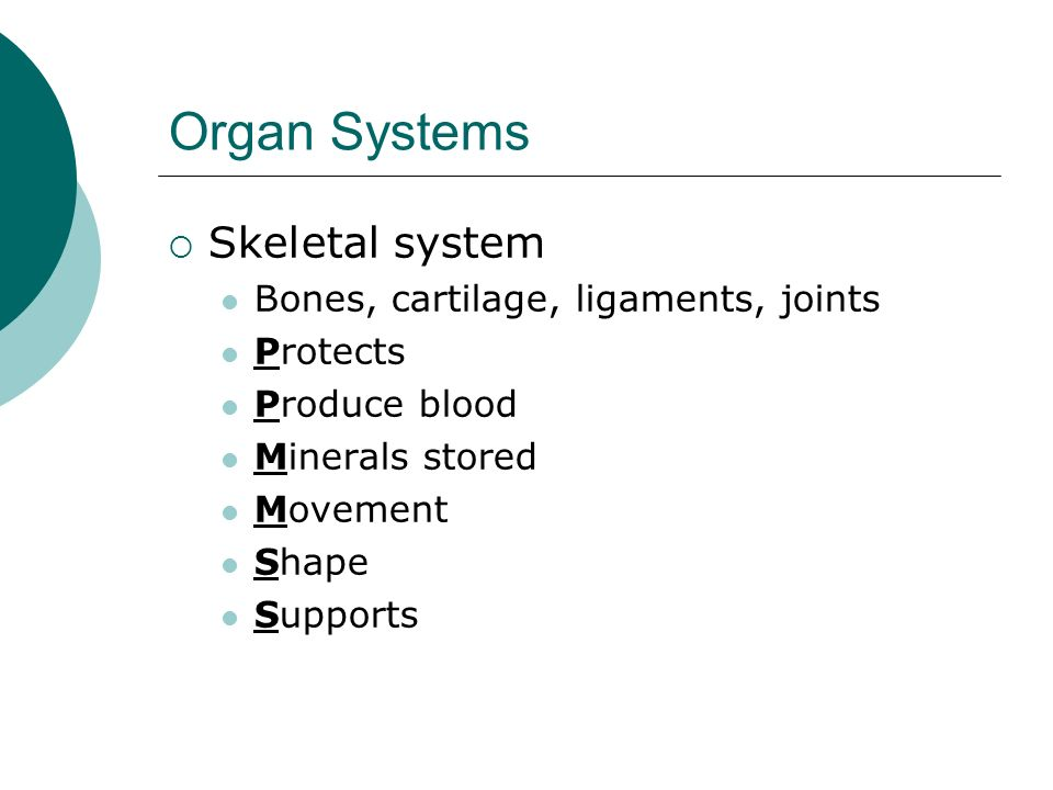 Organ Systems Skeletal system Bones, cartilage, ligaments, joints