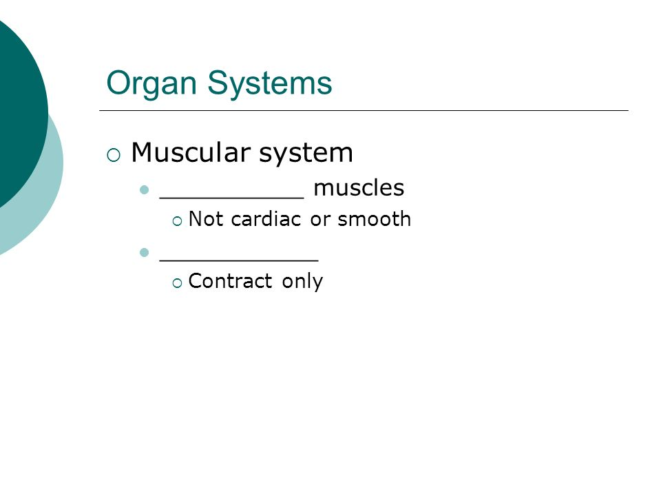 Organ Systems Muscular system __________ muscles ___________