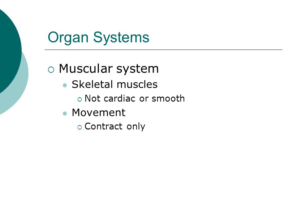 Organ Systems Muscular system Skeletal muscles Movement