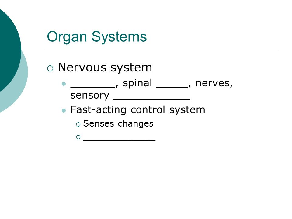Organ Systems Nervous system