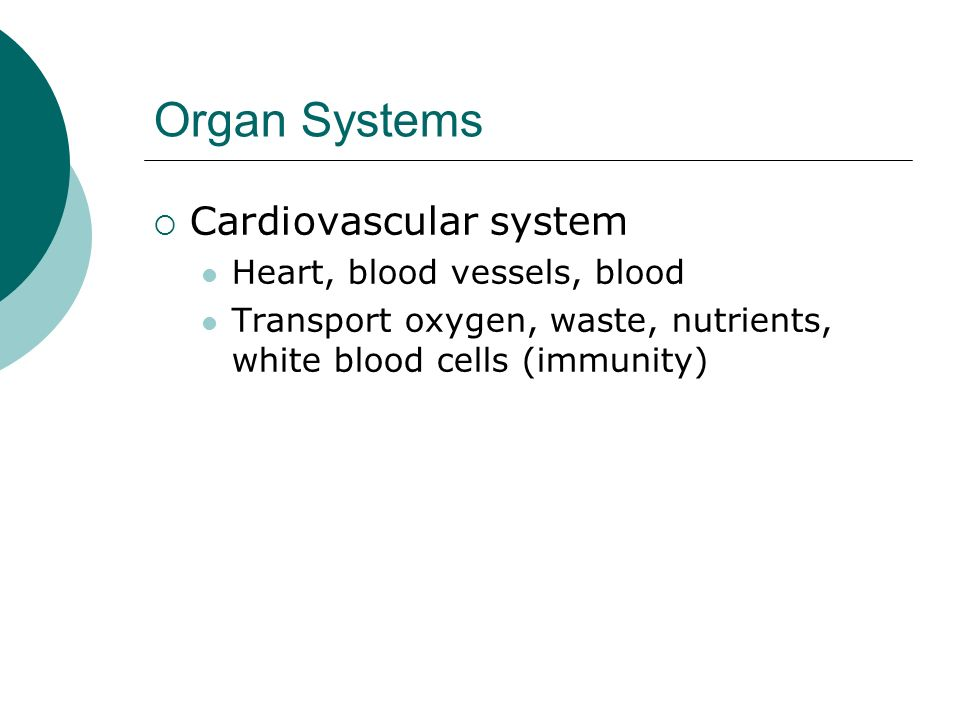 Organ Systems Cardiovascular system Heart, blood vessels, blood