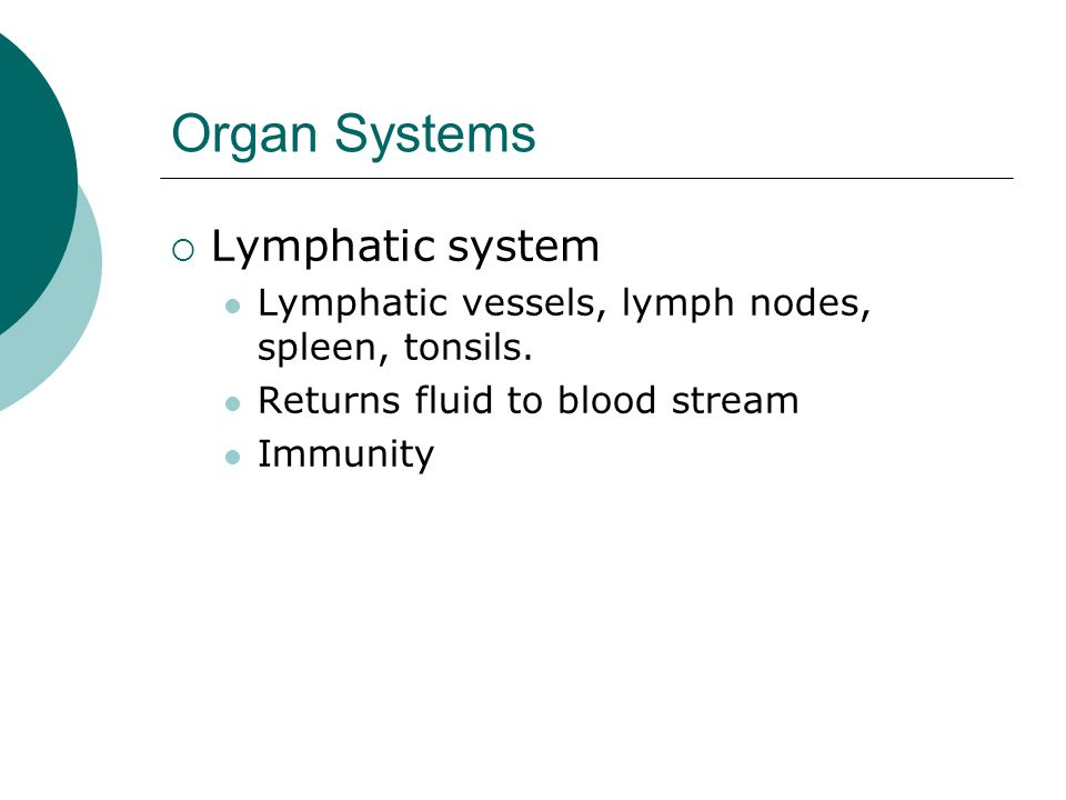 Organ Systems Lymphatic system