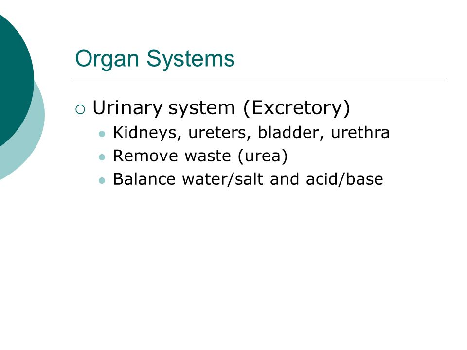 Organ Systems Urinary system (Excretory)