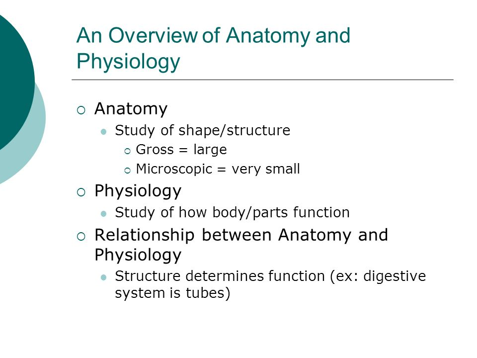 An Overview of Anatomy and Physiology