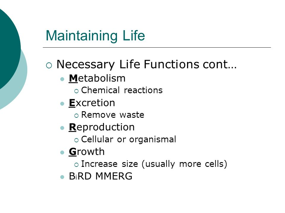 Maintaining Life Necessary Life Functions cont… Metabolism Excretion