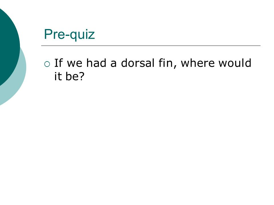 Pre-quiz If we had a dorsal fin, where would it be