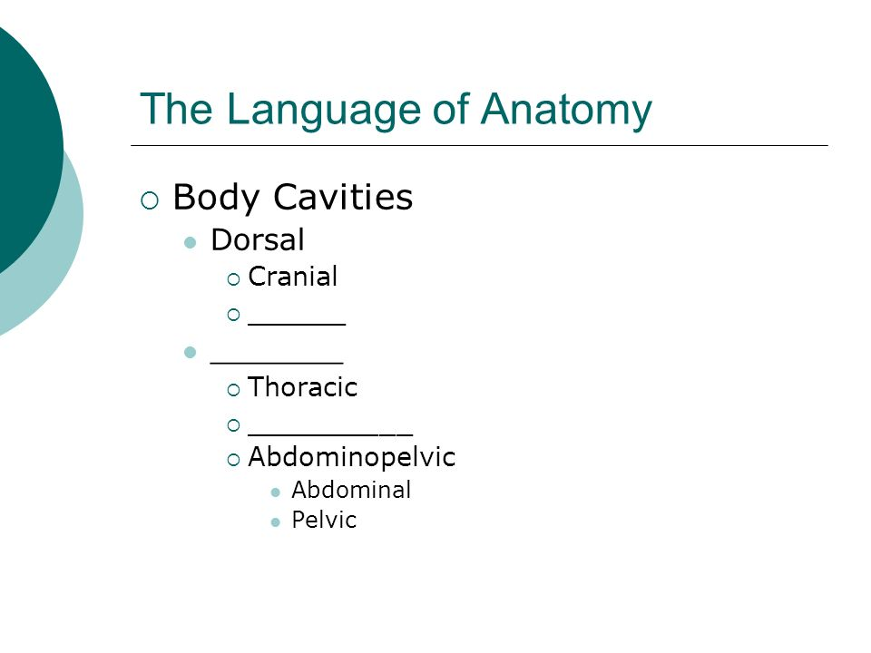 The Language of Anatomy