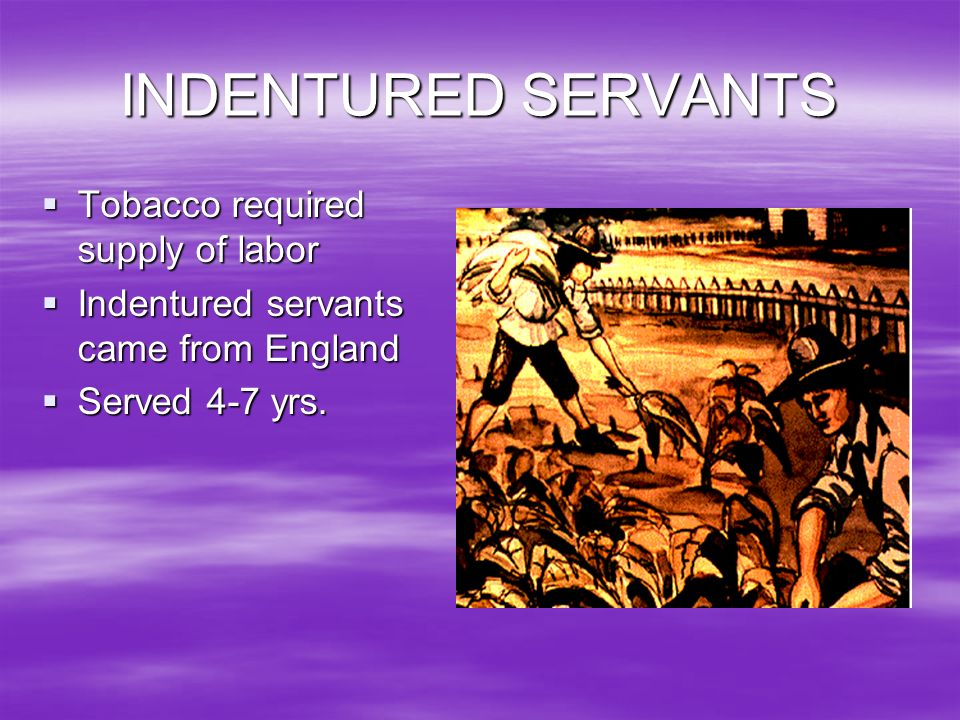INDENTURED SERVANTS Tobacco required supply of labor