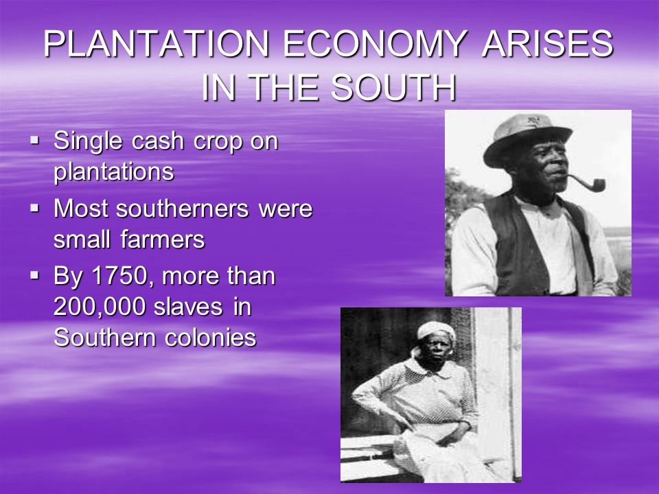PLANTATION ECONOMY ARISES IN THE SOUTH
