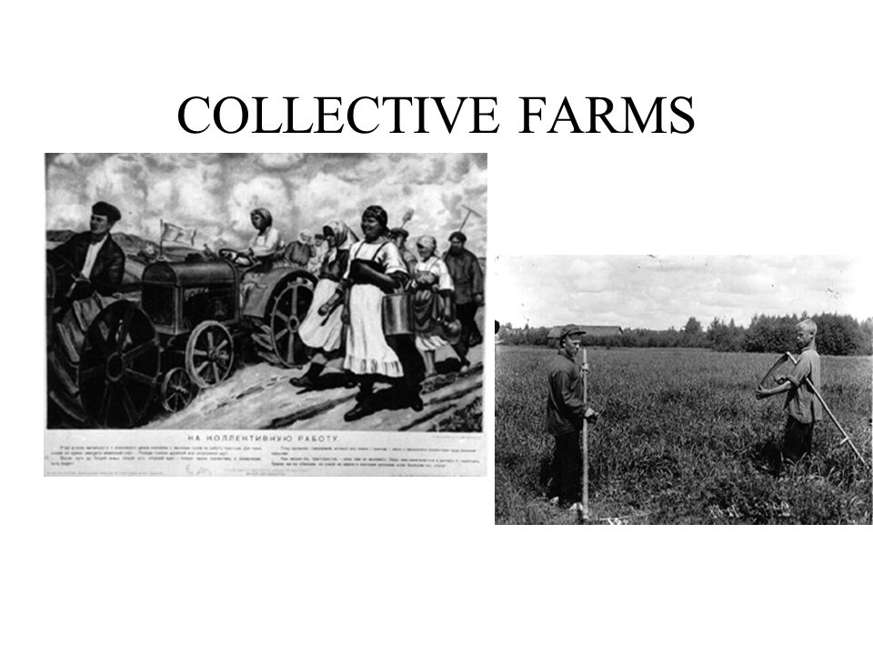 COLLECTIVE FARMS