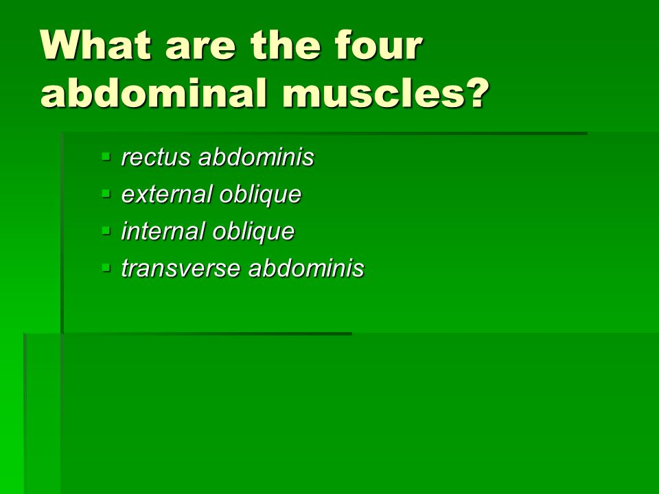 What are the four abdominal muscles