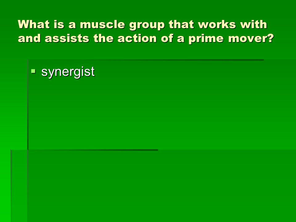 What is a muscle group that works with and assists the action of a prime mover