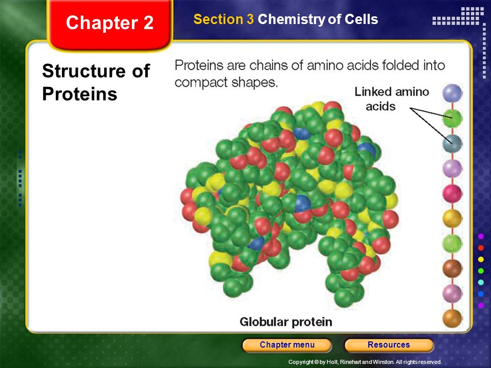 Chapter 2 Section 3 Chemistry of Cells Structure of Proteins