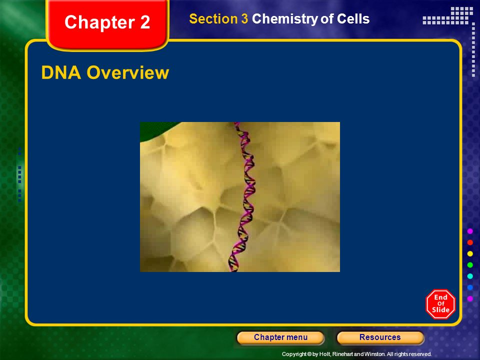 Chapter 2 Section 3 Chemistry of Cells DNA Overview