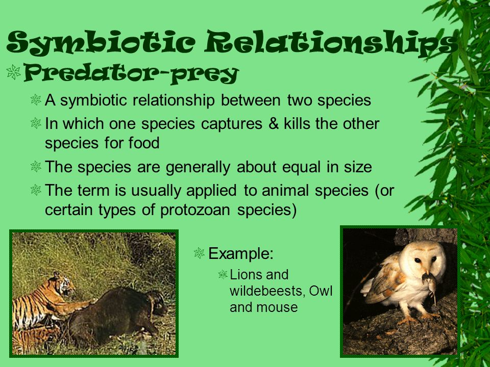 Examples Of Symbiotic Relationships Choice Image Example Cover