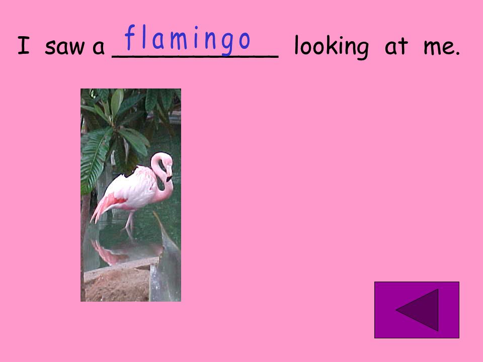 flamingo I saw a ___________ looking at me.