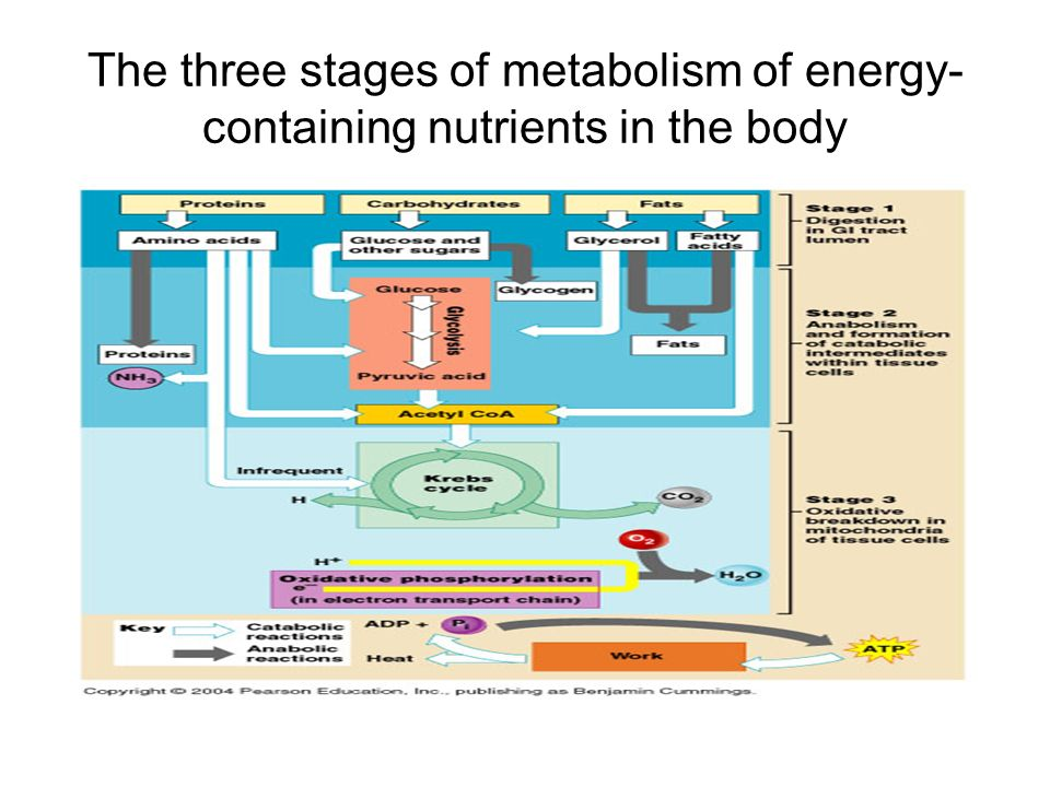 nutrition metabolism and body temperature regulation