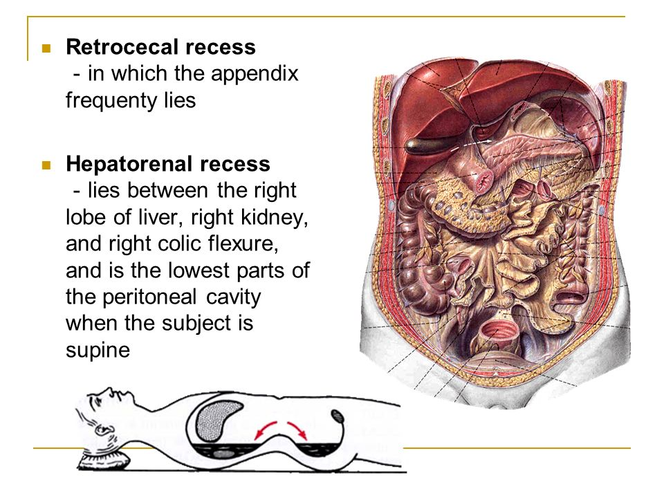 The peritoneum SHANDONG UNIVERSITY Liu Zhiyu - ppt video online download