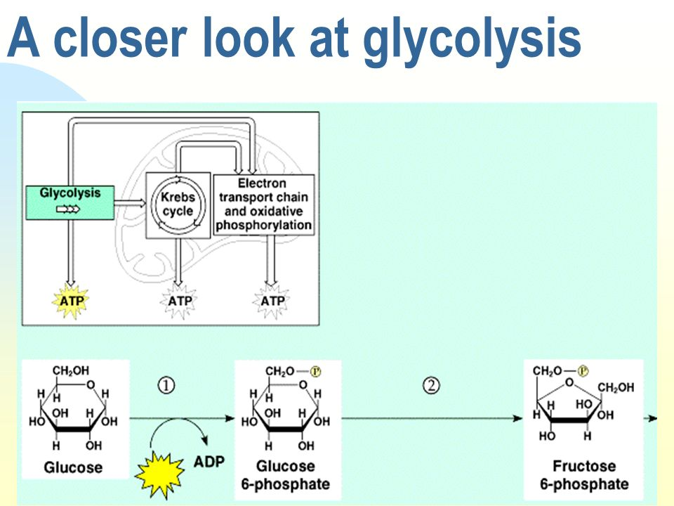 A closer look at glycolysis