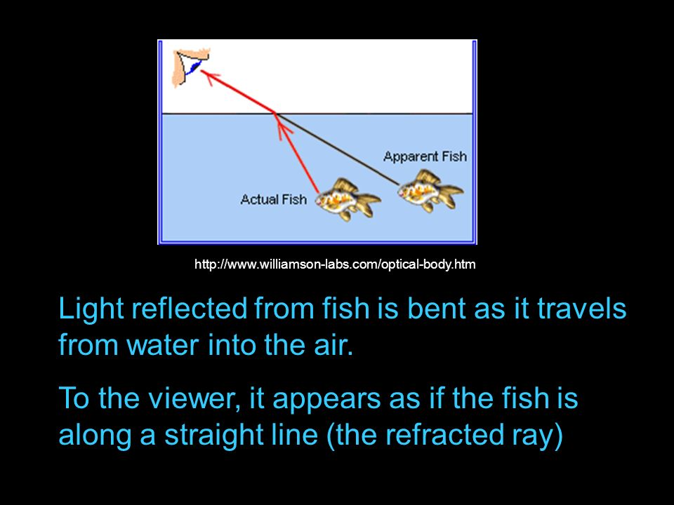 http://www.williamson-labs.com/optical-body.htm Light reflected from fish is bent as it travels from water into the air.