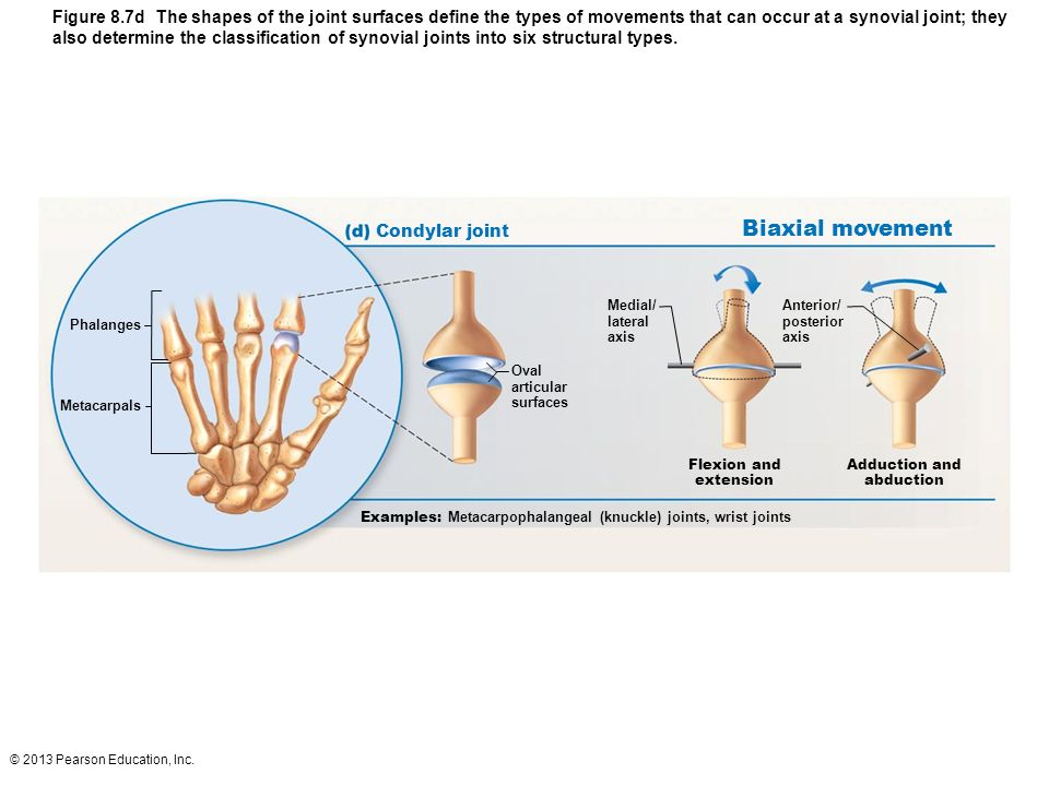Types Of Synovial Joints Ppt Video Online Download