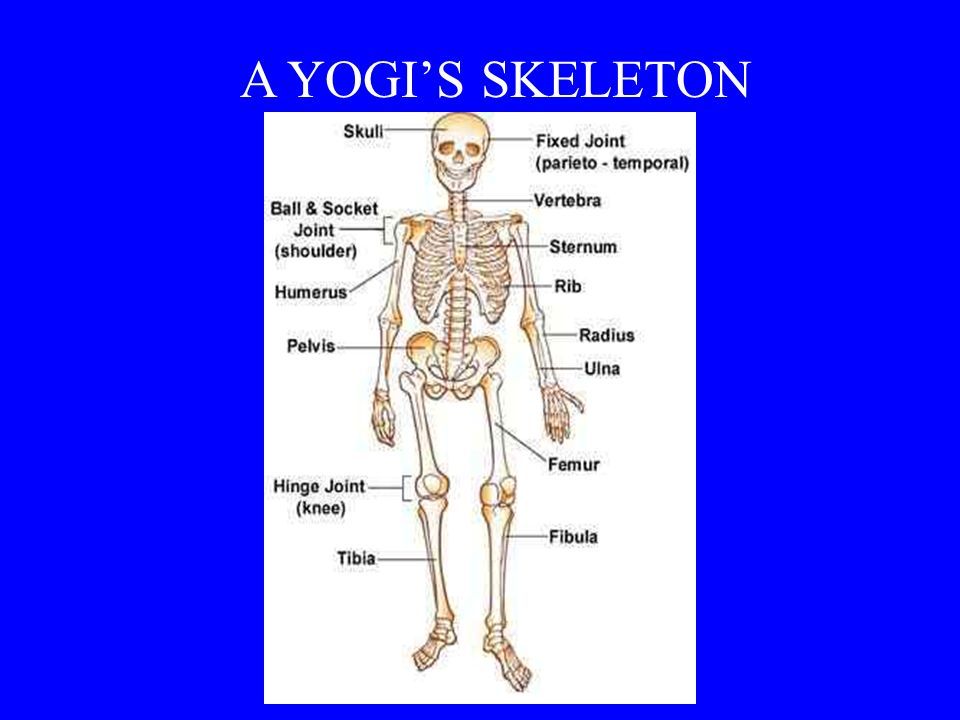 Anatomy and Physiology The Practice of Yoga - ppt video online download