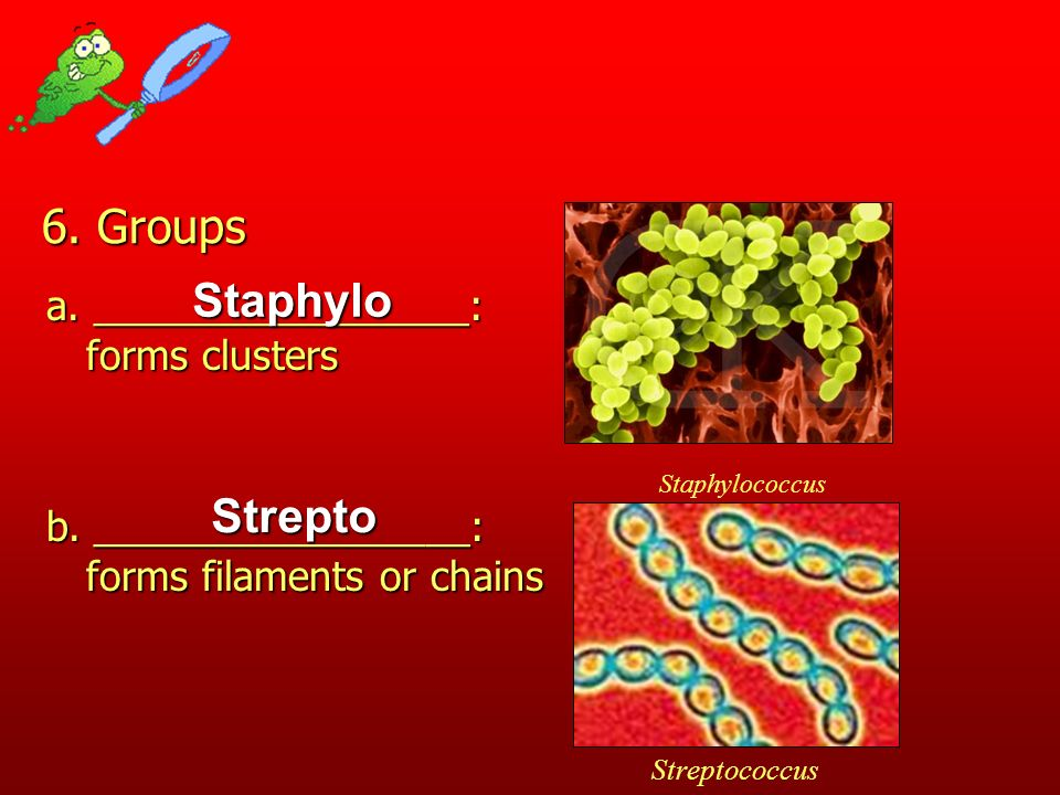 6. Groups Staphylo Strepto a. _________________: forms clusters