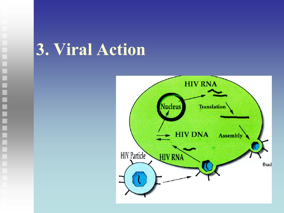 3. Viral Action 3. Viral Action