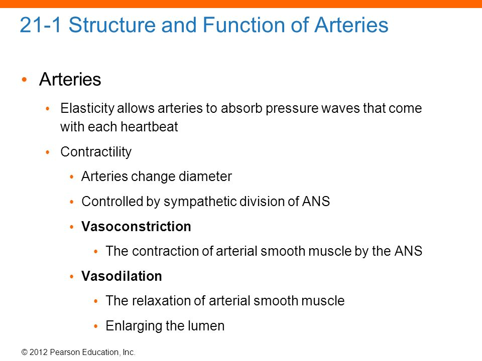 21 Blood Vessels and Circulation. - ppt download