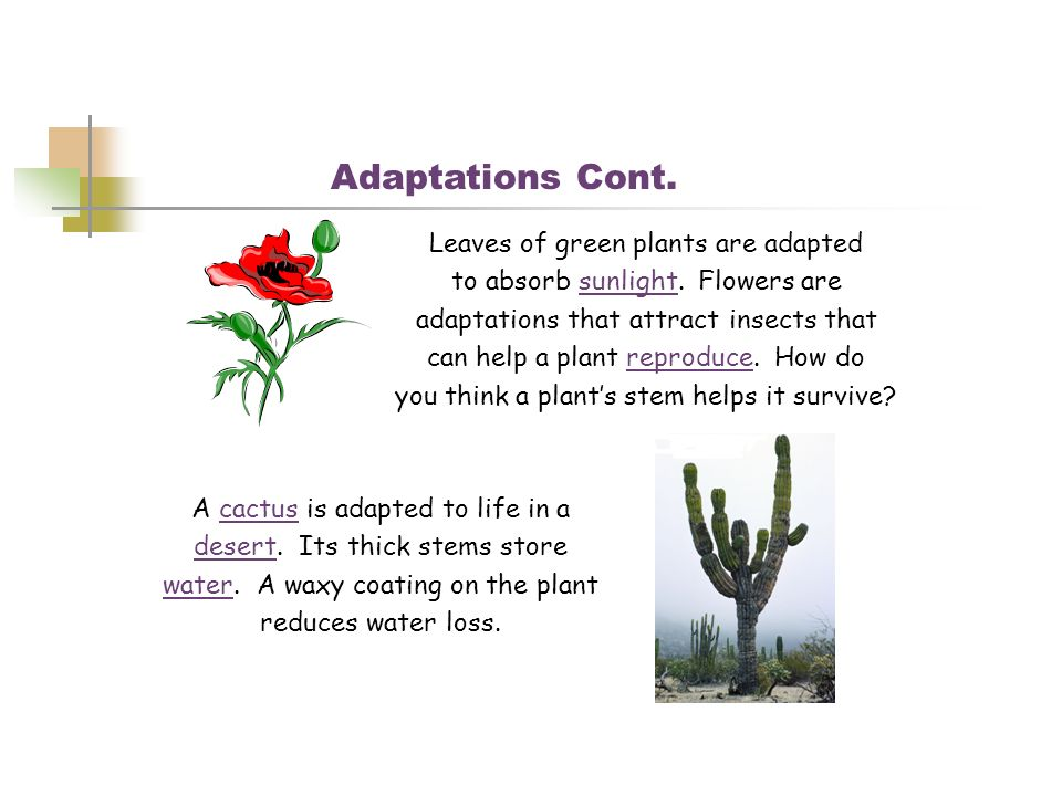 Adaptations Cont. Leaves of green plants are adapted