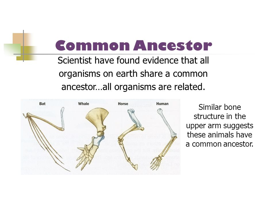 Common Ancestor Scientist have found evidence that all