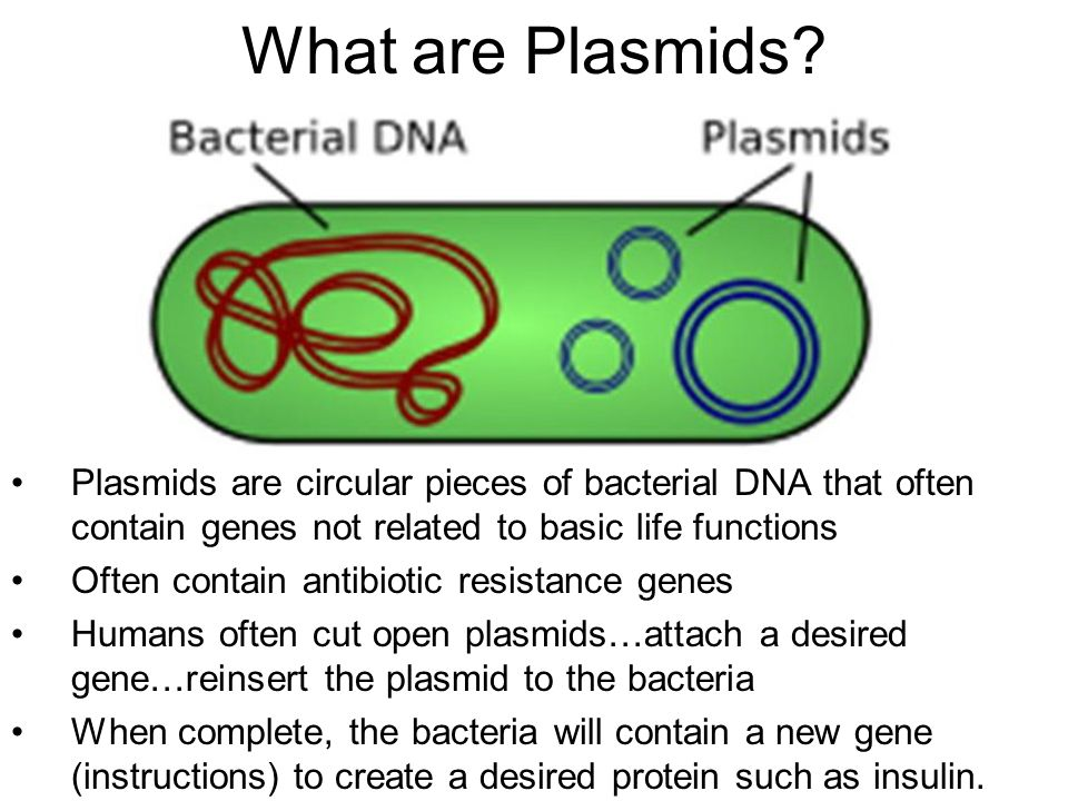 what are plasmids plasmids are circular pieces of bacterial dna