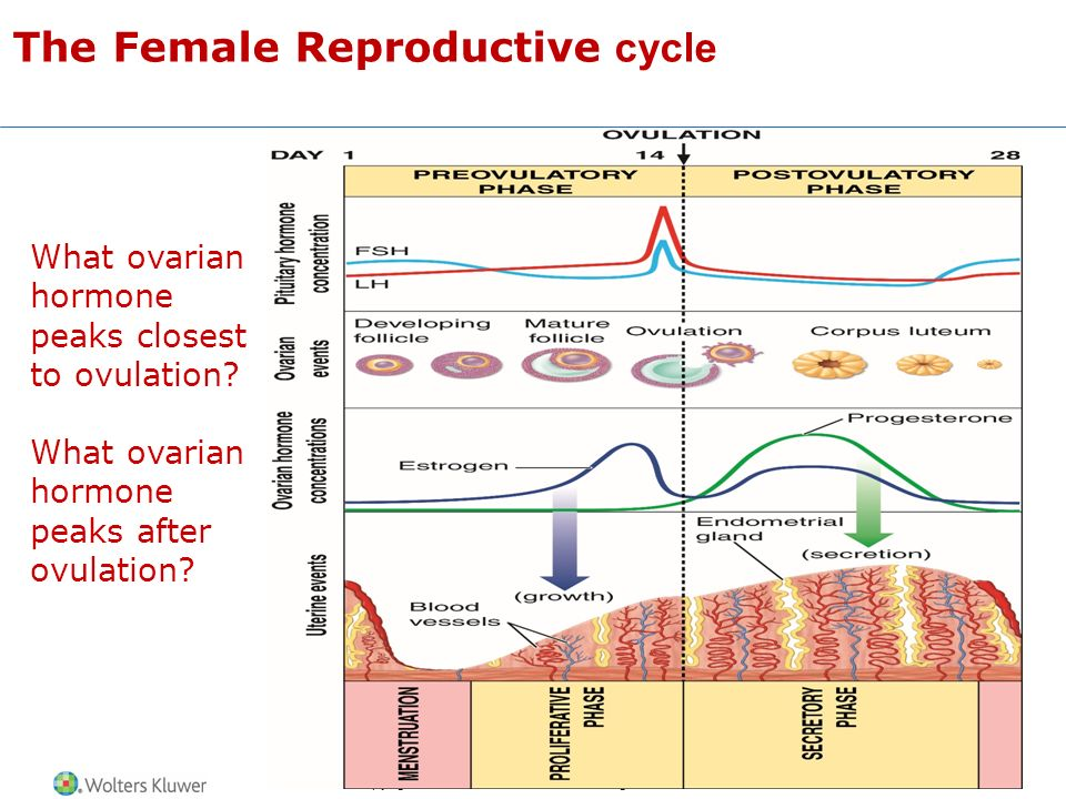 The Male And Female Reproductive Systems Ppt Video Online Download