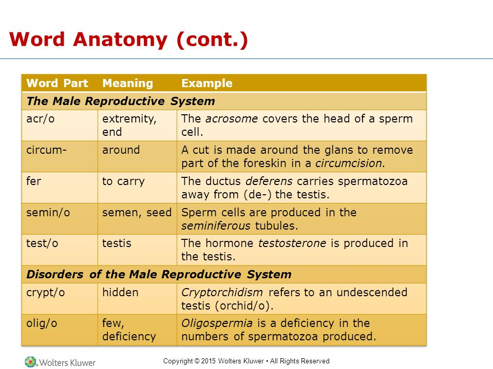 The Male and Female Reproductive Systems - ppt video online download