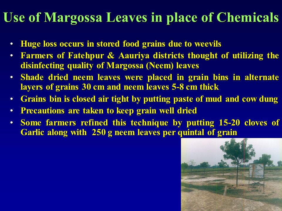 Use of Margossa Leaves in place of Chemicals