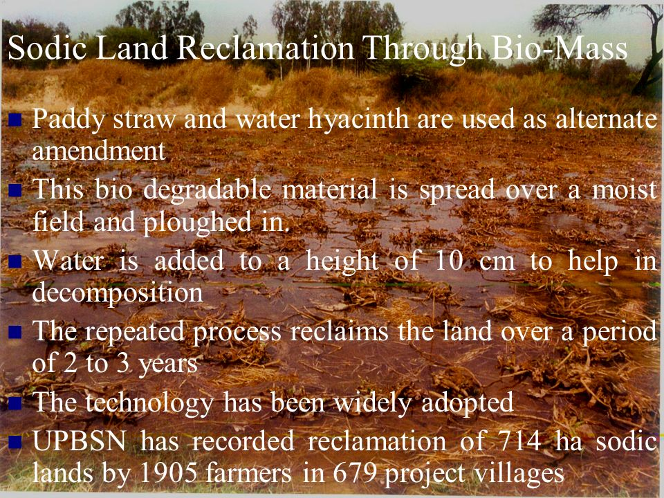 Sodic Land Reclamation Through Bio-Mass