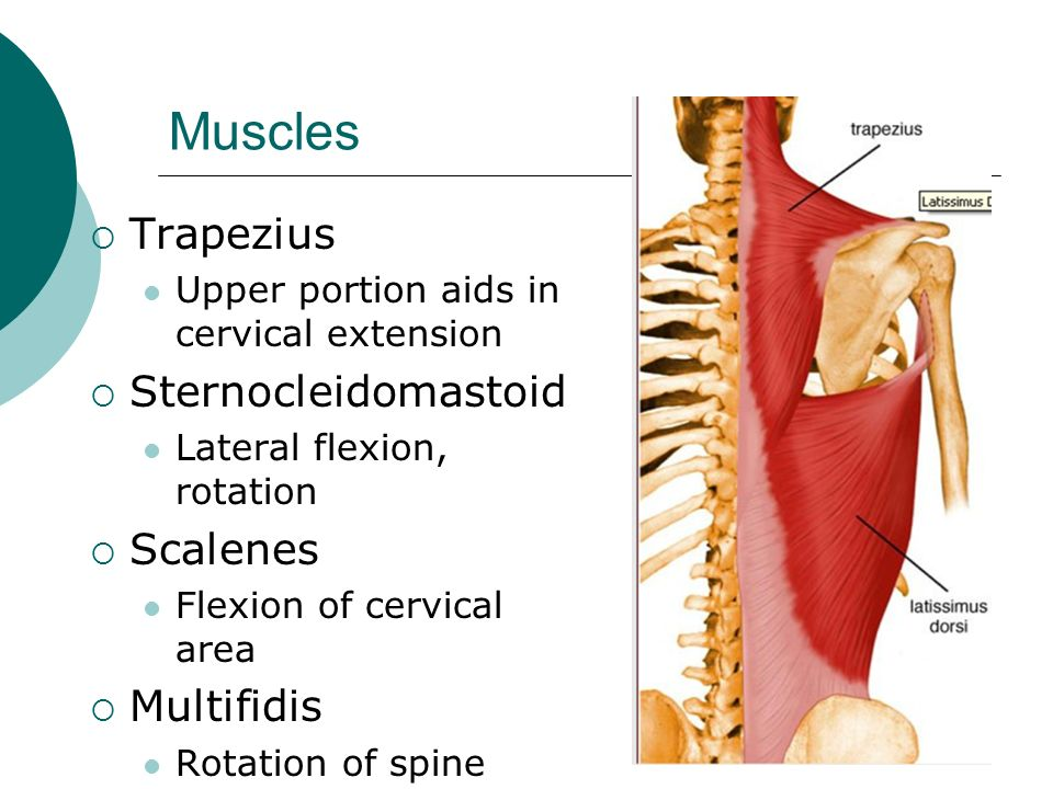 Anatomy and Injuries to the Spine - ppt video online download