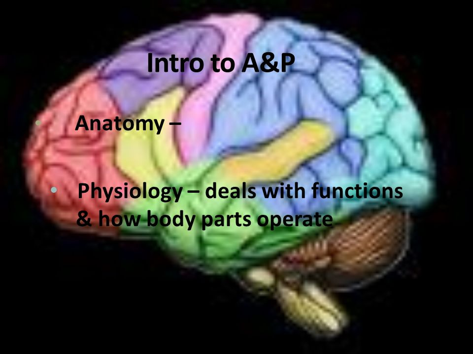 CHAPTER 1 INTRO. TO A&P. - ppt download