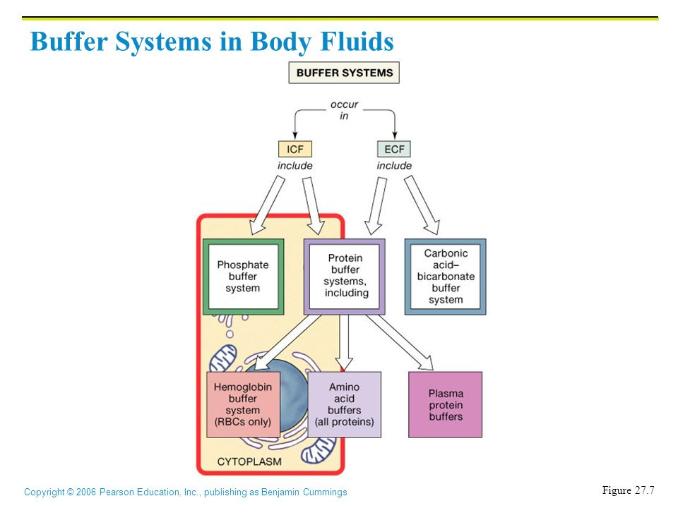 acid base buffer systems A buffer system exists to help neutralize the blood if excess hydrogen or hydroxide ions are produced the buffers help to keep the ph in the normal range by taking up (combining with) the excess hydrogen or hydroxide ions.
