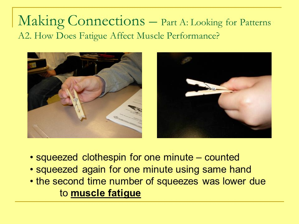 muscle fatigue clothespin lab answers