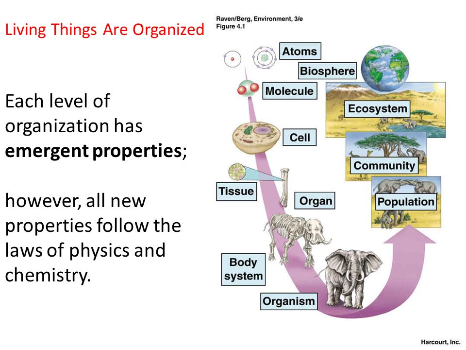 Ap Biology Unit 1 A View Of Life Ppt Video Online Download