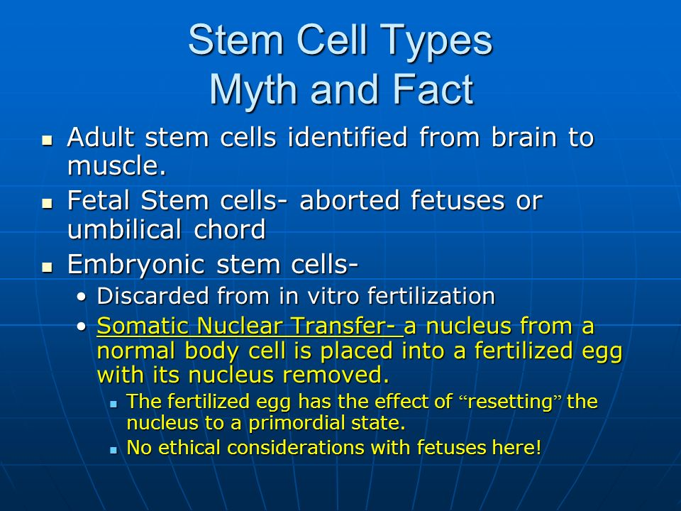 Stem Cell Types Myth and Fact