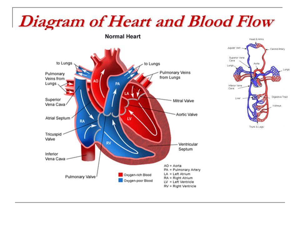 Diagram of Heart and Blood Flow