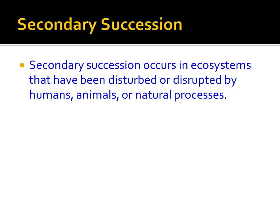 Secondary Succession Secondary succession occurs in ecosystems that have been disturbed or disrupted by humans, animals, or natural processes.