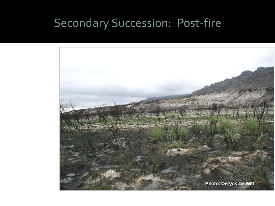Secondary Succession: Post-fire