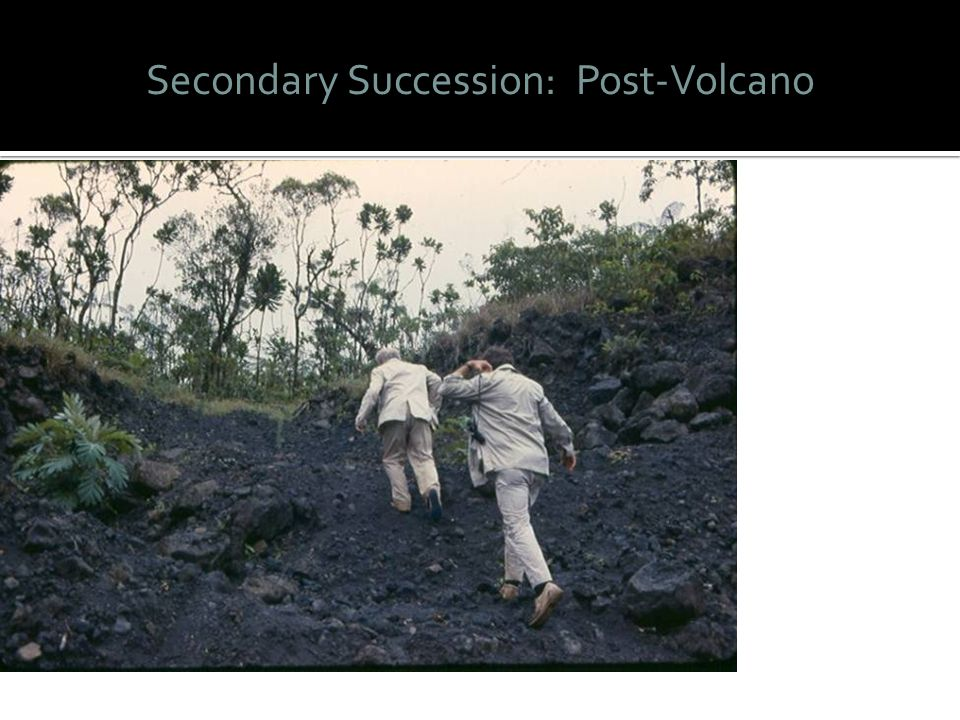 Secondary Succession: Post-Volcano